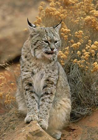 92 best images about animals of the desert on Pinterest ...