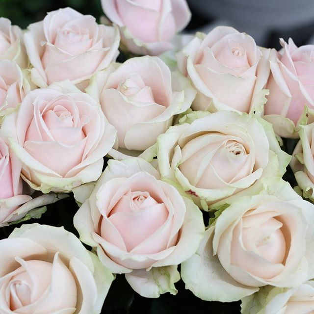 Kauniit valmistujaisruusut FLÖR Peltolasta ja FLÖR Skanssista.   #ruusu #ruusut #rose #flör #flör2017 #florkukkajapuutarha  #kukkajapuutarhaflör #kukka #puutarha #turku #love_turku #kissmyturku #flowerstagram #flowerinspo #kukkakauppa #natureinspires #natureinspired
