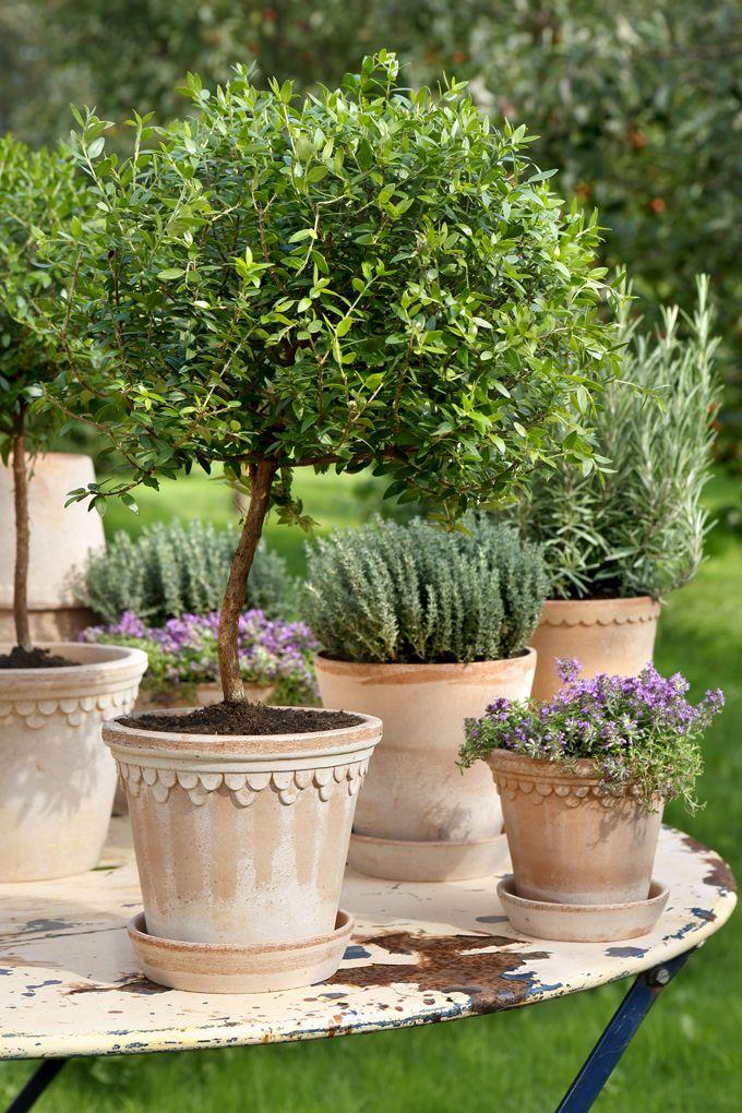 25 Best Tuscan Garden Ideas On Pinterest: 25+ Best Ideas About Italian Garden On Pinterest