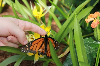 Butterflies Go Free in Montreal - don't miss it!
