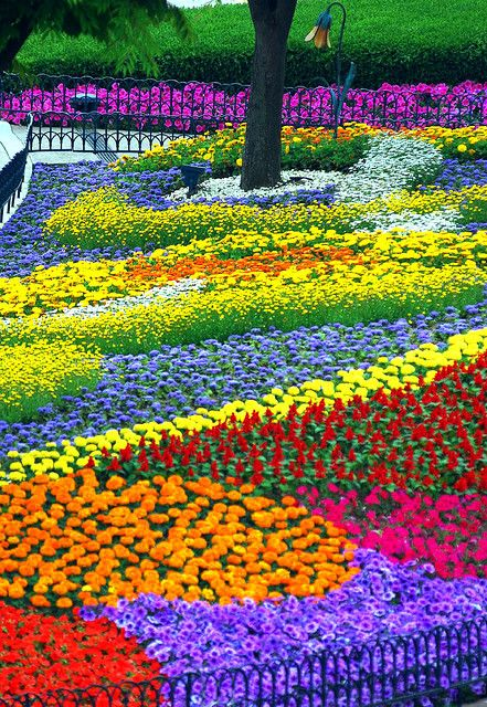 Eveland Flower Garden, South Korea - Ahh the colors