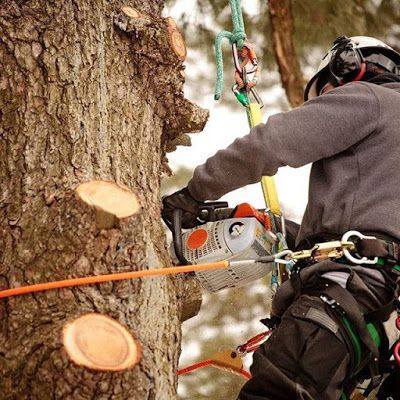 Choosing The Right Tree Removal Service Can Save You Money And Headaches http://treezybrisbane.blogspot.com.au/2016/10/choosing-right-tree-removal-service-can.html #treeRemoval #treeRemovalServices #treefeller #treeremovalBrisbaneSouthside #treeRemovalBrisbane #treeFellerBrisbane #treeFellerbrisbaneSouthside