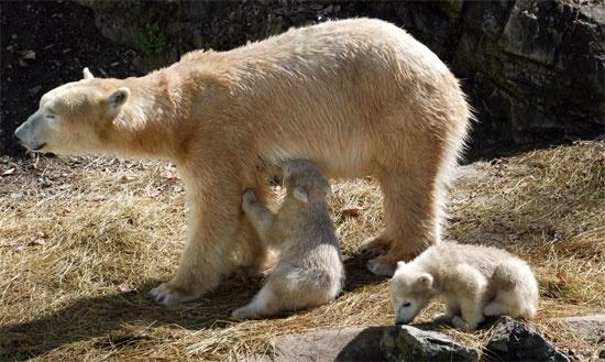 http://www.rajzazitku.cz/35-zazitky-se-zviraty/129-osetrovatelem-v-zoo.htm