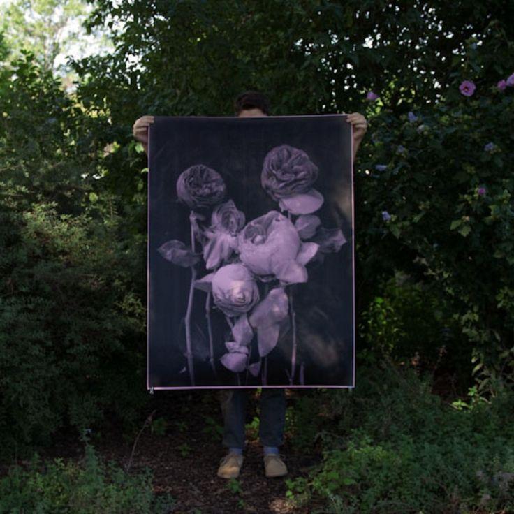 DEBBIE CARLOS Roses Poster