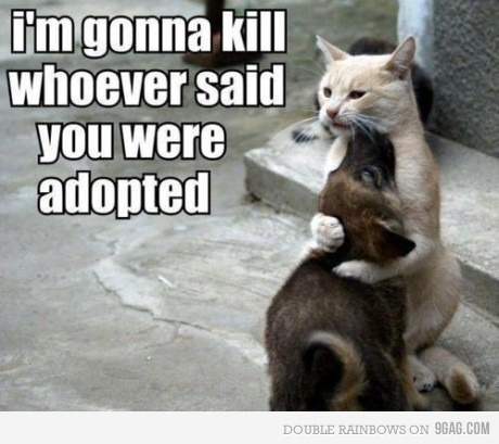 omg: Dogs Fun, Funny Dogs, Funny Cat, So Cute, Funny Pictures, Puppys, Funnycat, So Sweet, Animal