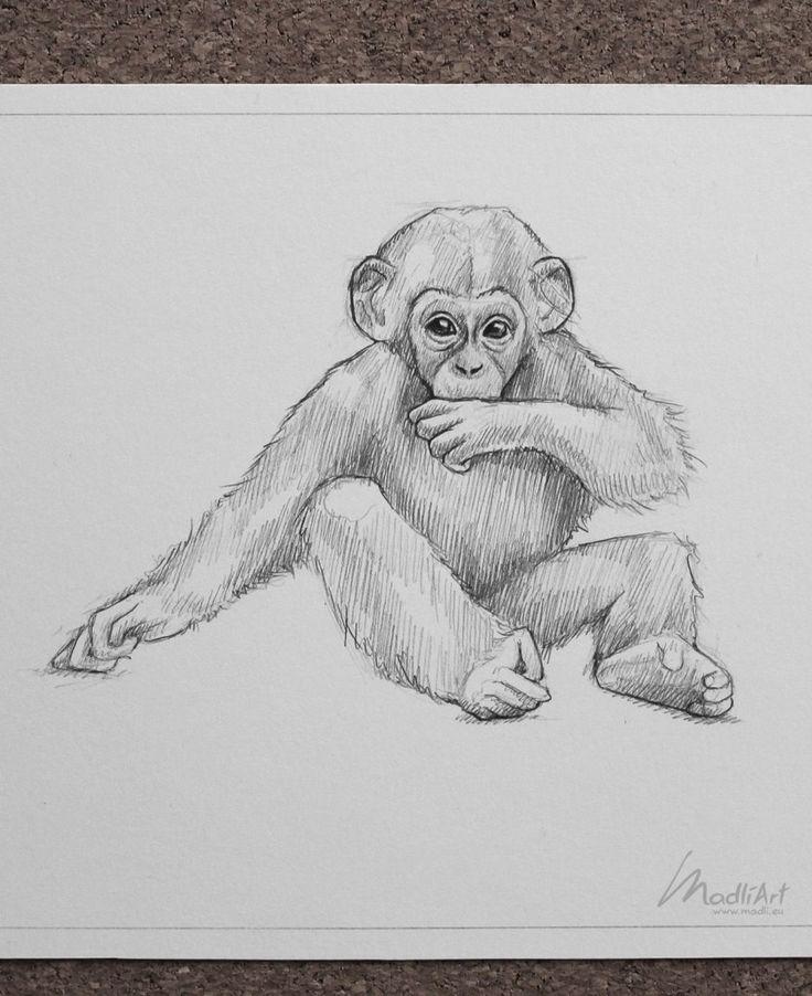 malvorlagen schimpansen  zeichnungen affen zeichnen