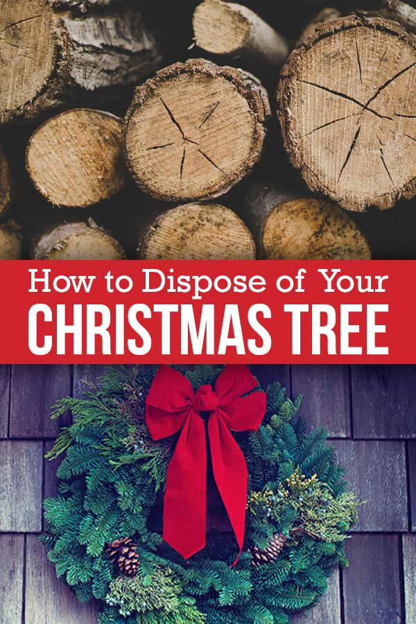 Everything You Need To Know About Getting Rid Of Your Christmas Tree Holiday Tree Christmas Tree Christmas