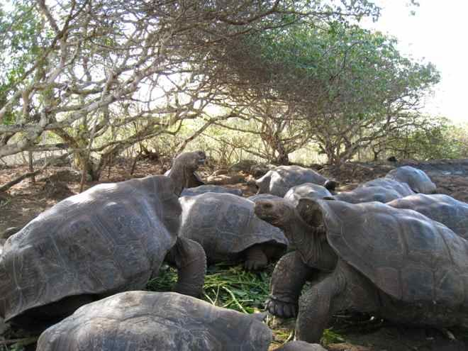 The gentle Galapagos giants #travel #travelwithkids #familytravel #familyholidays #familyvacations #GalapagosIslands #Ecuador #tortoises http://www.suitcasesandstrollers.com/articles/view/the-galapagos-islands