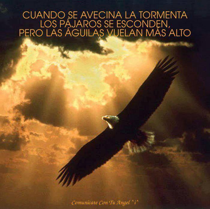 #aguila #frases #volar