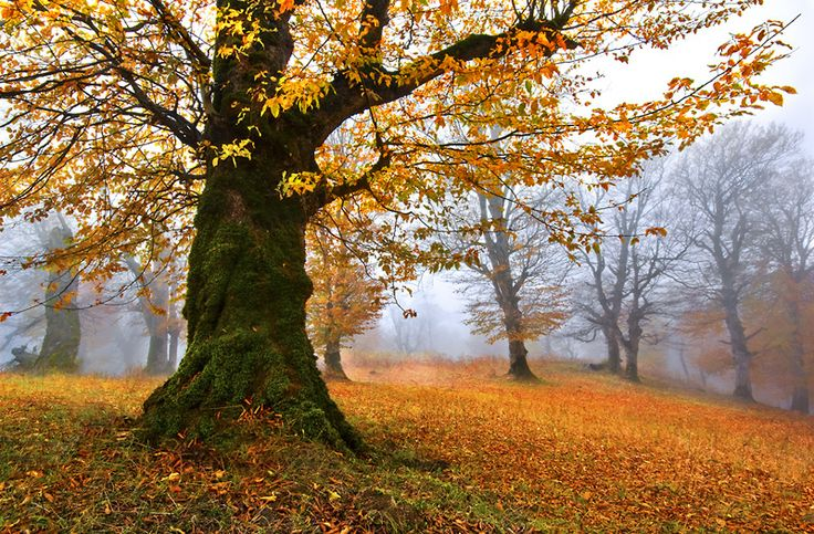 Autumn tree: Autumn Scene, Mohammad Shamsi, Green Trees, Grove Seyed Mohammad, Autumn Trees, Tree World Trees, Photo