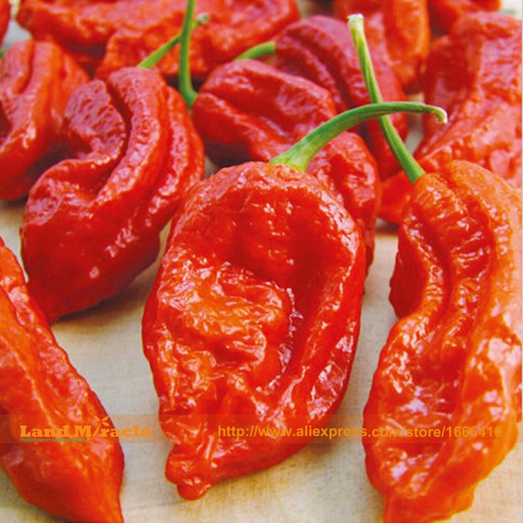 100 Seeds/Pack, Red Ghost Pepper Bhut Jolokia EXTREME HOT Chilli Heirloom WORLD RECORD #Affiliate