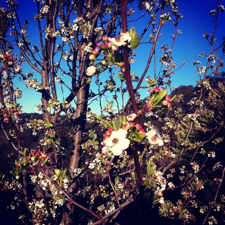 #Spring in the beautiful #Adelaide Hills >> #AdelHills