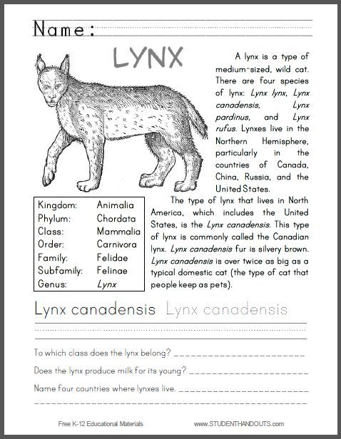 Lynx Canadensis Primary Worksheet - Great for learning about animal classification and range. Informational text, questions, handwriting/spelling practice, and coloring all in one free worksheet for the primary grades.