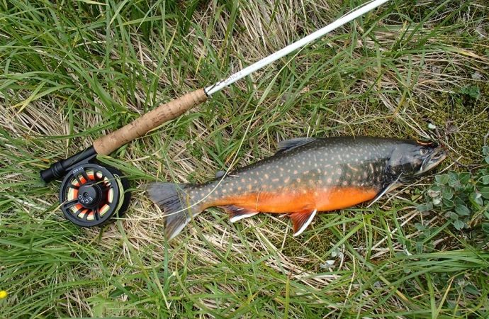 Fly fishing for arctic char in greenland fly fishing for Arctic char fish