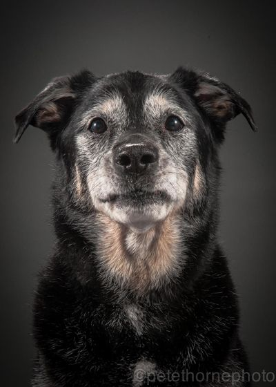 "Who Says Elderly Dogs Aren't as Cute as Pups? | Next Avenue - Puppies steal people's hearts. But then they age and cease to elicit as many ""awws"" as they once did. Canadian photographer Pete Thorne wondered why.   So the 35-year-old set out to photograph elderly dogs in a project he's titled: ""Old Faithful."" The goal is to show the beauty and grace of older pets."
