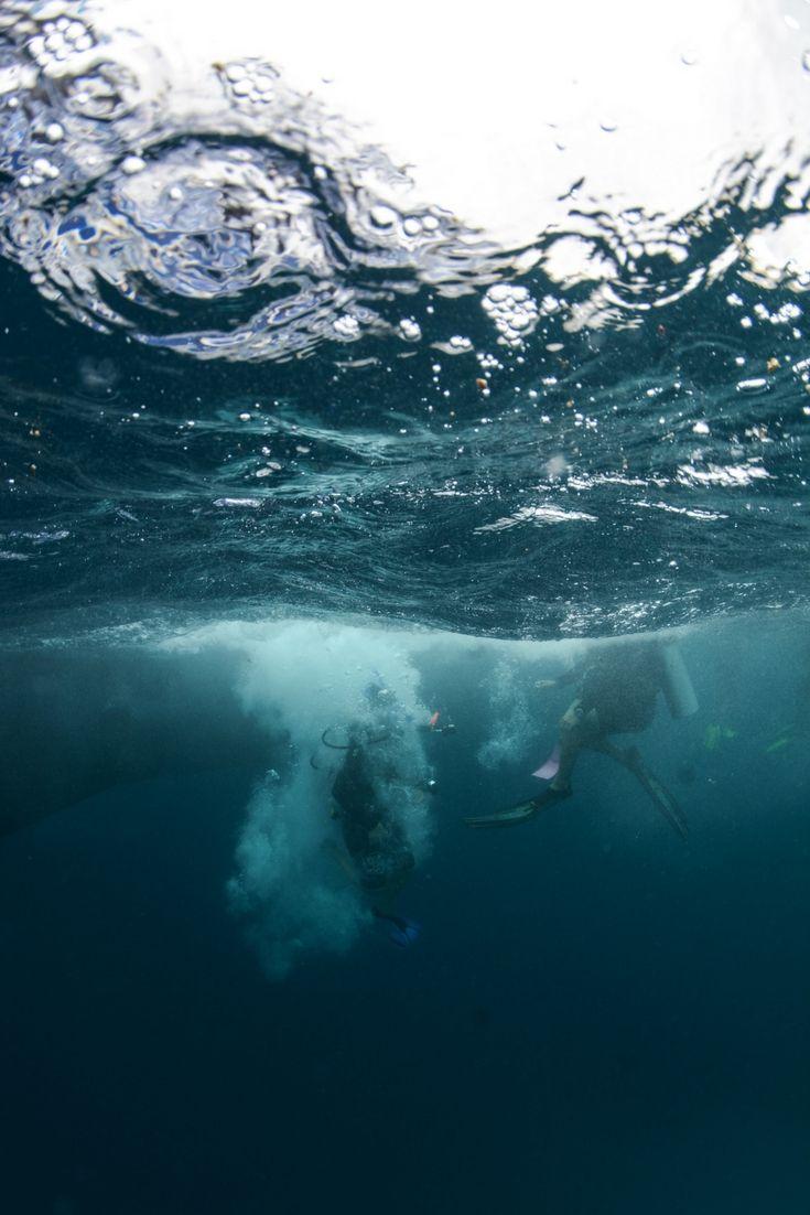 Spot the scuba diver!