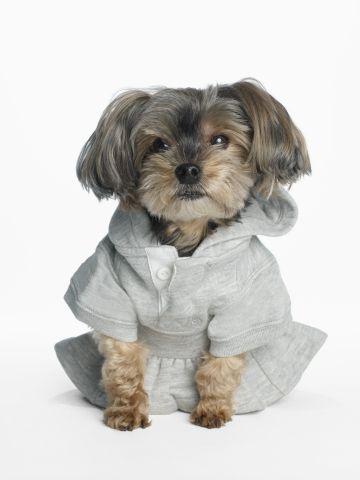 Even #puppies look good in a peplum!