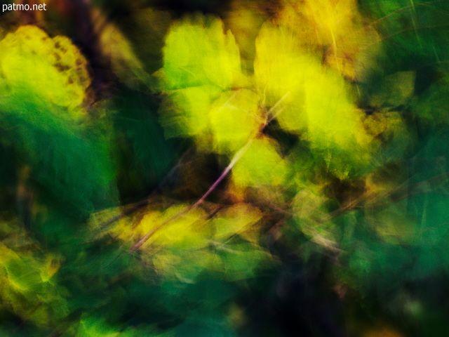 Image de feuilles soufflées par le vent