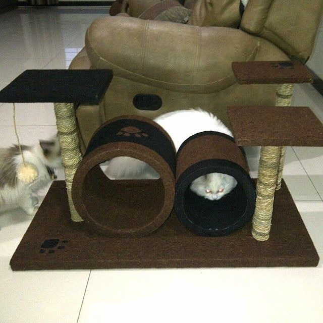 condo/garukan kucing/mainan kucing/cat tree/cat toy. Kode JC 23 ukuran tinggi: 50cm lebar: 50x80cm Harga Rp 1.850.000 Kami menerima pemesanan CUSTOM ( mengikuti design keinginan anda atau dari design kami ) Hubungi kami : JL: Aselih Rt:10 Rw:01 Cipedak-Ciganjur Jagakarsa Jakarta-Selatan 12630 No:72 Telp: 087882372643 (Whatsapp)-02194653190 PIN BB 24E4F059, Line: shine_art3