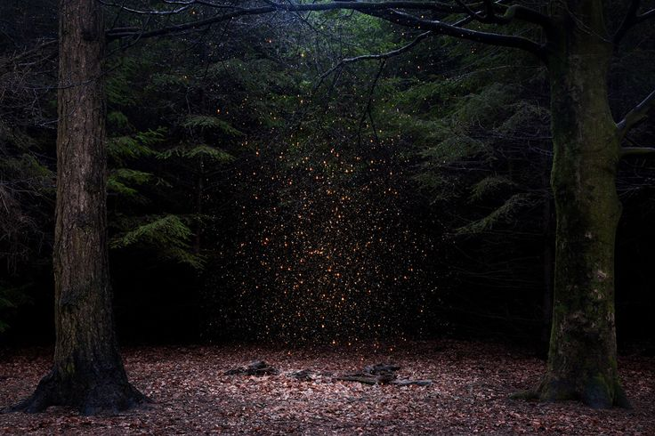 Stars 8. - (Ellie Davies)