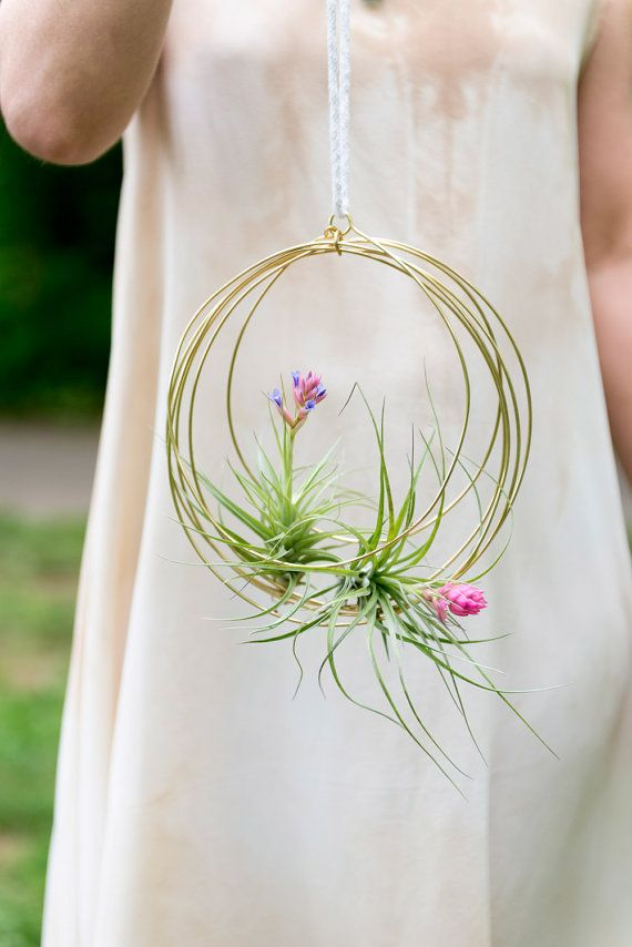 Medium Blooming Tillandsia Ornaments air plant by elainebjewelry