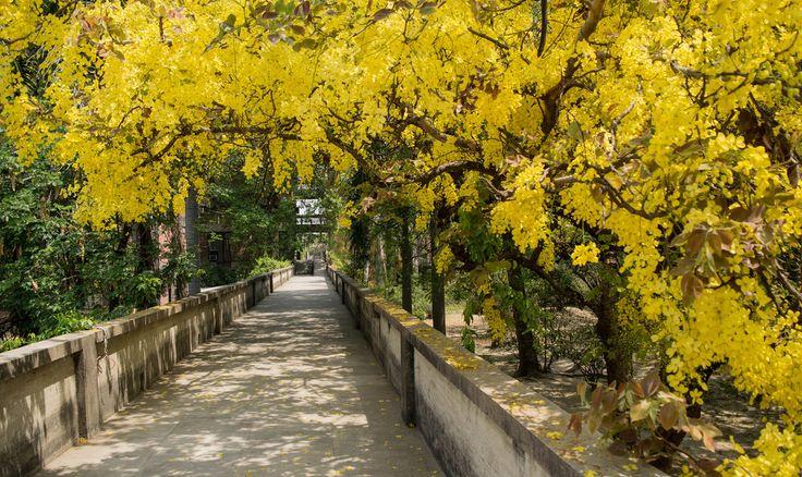 Spring @IIT Kanpur