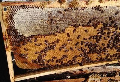 Ορεινή Μέλισσα: Έλεγχος αποθεμάτων τροφής χωρίς να ανοίξουμε τη κυψέλη. Πρακτική μέθοδος στα μελίσσια!