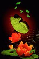 pluie de roses rouges fleurs Image, animated GIF
