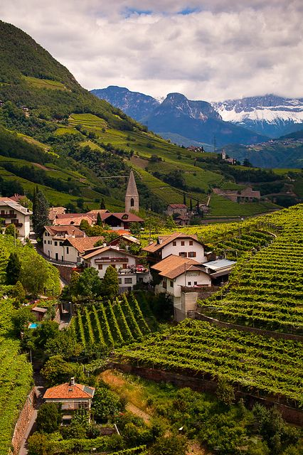 Ritten Vineyards, South Tyrol, Trentino-Alto Adige ~ Italy