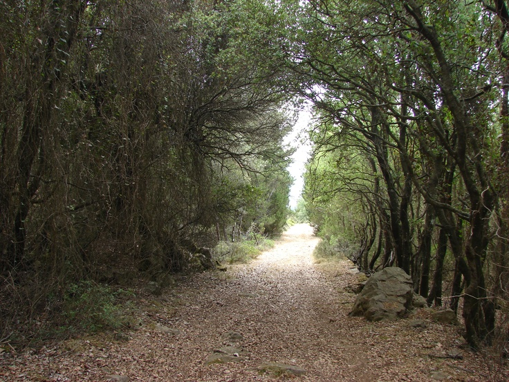 walking paths...adorable!!!!