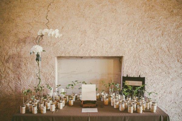 cadeau invités-des plantes en pot