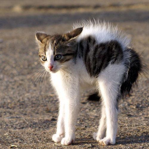 Meow!Funny Kitty, Dogs, Grumpy Kitty, Heart Shape, Fur, Kittens, Halloween, Animal, Cat Photos