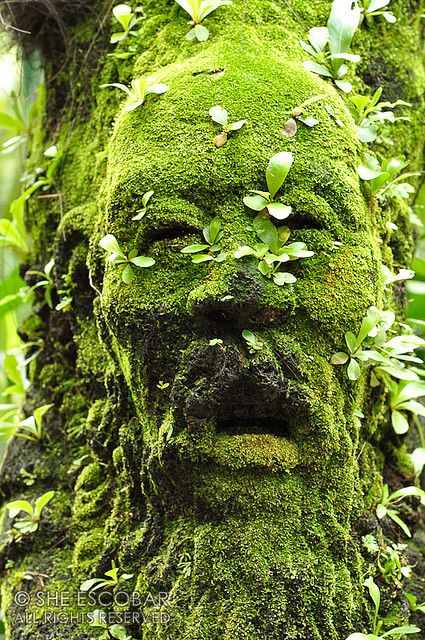 Singapore Botanical Garden    A figure of a man's head covered with moss and plants at The Mist House.