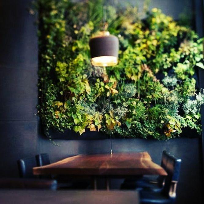 Вертикальное озеленение офиса своими руками  Вертикальное озеленение офиса достаточно трудоемкий процесс. Сейчас проекты по вертикальному озеленению можно увидеть у многих передовых IT компаний. Связано это прежде всего с тем, что сейчас живые стены как никак популярны. Для создания вертикального озеленения в офисе используется система вертикального озеленения оригинальные специфические конструкции, встраиваемые в пространства, которые размещены в пролетах этажей либо устанавливаемых у стен.