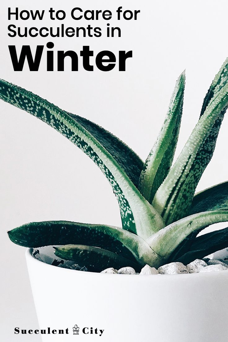 How To Take Care Of Succulents In The Winter | Succulent ...