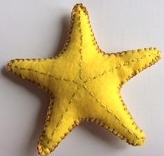 Big starfish, belly view