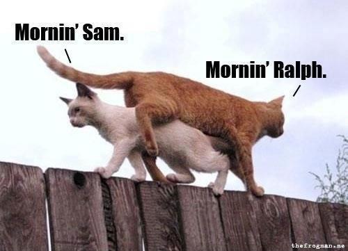 ❥ Mornin' Sam. Mornin' Ralph.Laugh, Looney Tunes, Funny Cat, Bugs Bunnies, Funny Stuff, Humor, Mornings, Kitty, Animal