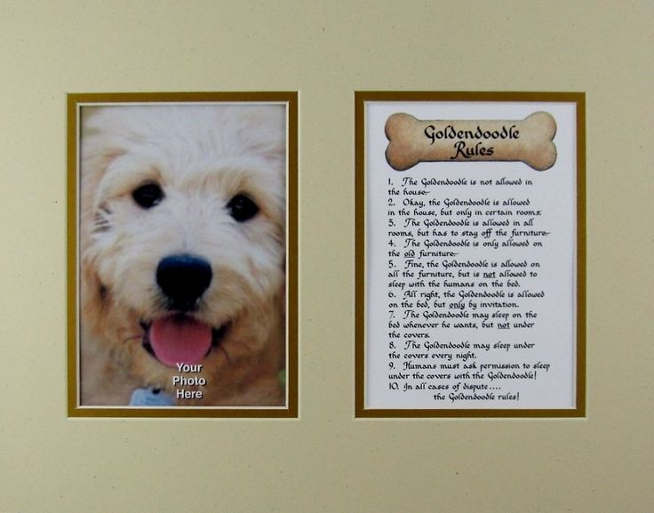 Dog Rules Goldendoodle Wall Decor Humorous Pet Dog Saying Keepsake Gift >>> Read more  at the image link. (This is an affiliate link and I receive a commission for the sales)