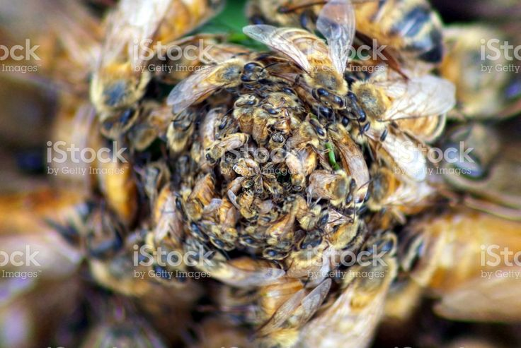 Creative Immersive Tiny Planet Inspired by Bees & Beehives royalty-free stock photo