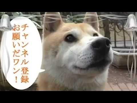 [힐링영상]오랫동안 주인을 만나지 못했던 강아지들의 격렬한 애정표현 - YouTube