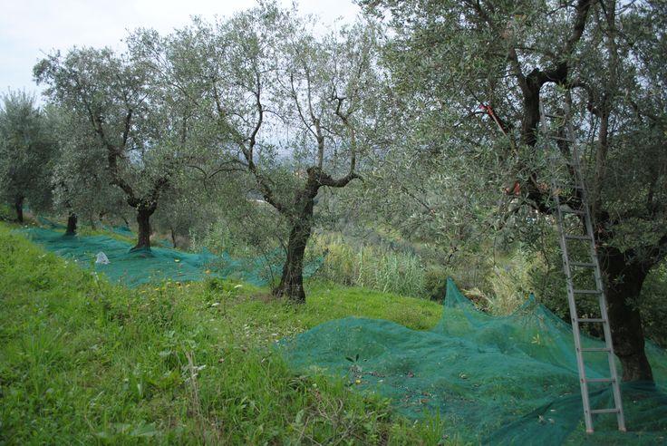 Mezőgazdasági hálókat is találnak kínálatunkban!  http://a-necc.hu/mezogazdasagi-vedohalok.htm