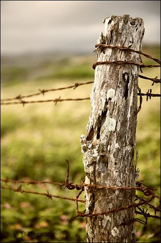 Fence. THIS IS SUCH A LOVELY PHOTO AND SAYS SO MUCH ABOUT FARM LIVING