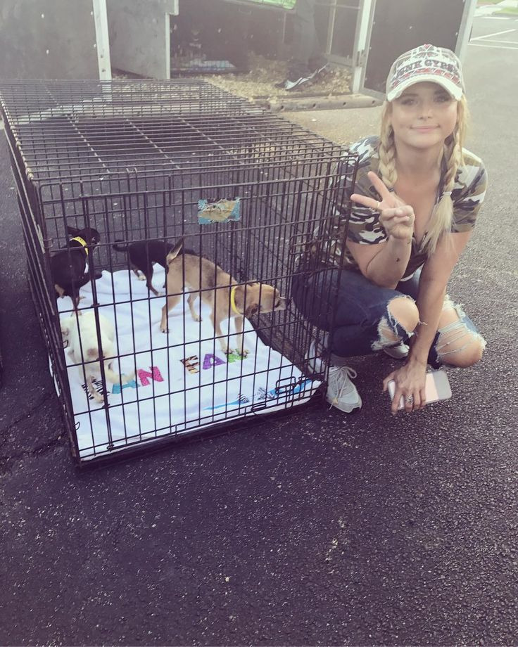 Miranda Lambert helps rescue hundreds of dogs & pets displaced by Hurricane Harvey - AOL Entertainment