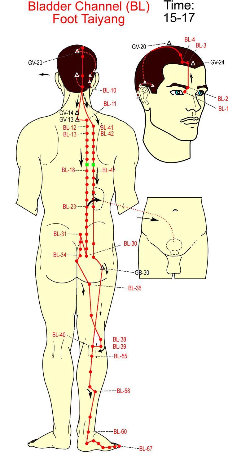 Bladder Channel http://www.academ.nl/ & http://www.medischeqigong.nl/ #qigong #acupuncture