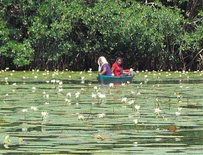 El Jardín de las ninfas. Guatemala | De paso por...