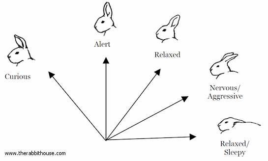 Communication non verbale du lapin