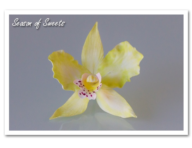 How to Make Gumpaste Orchids #gumpaste #orchids #craftsy