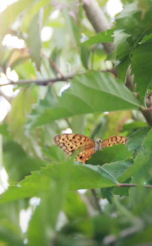#nature #good #green #picoftheday #nice #beautiful #place #loveit #seraph #seraphstore  www.seraphstore.com