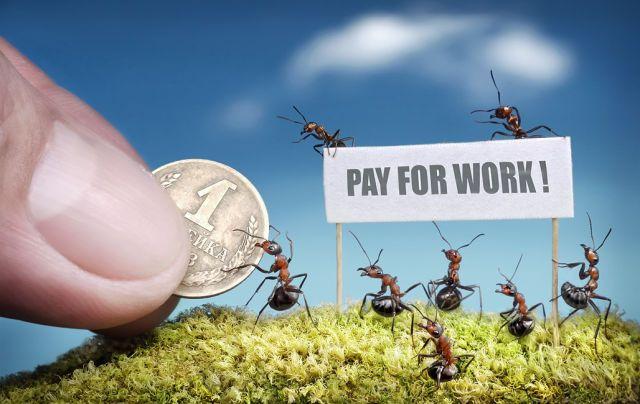 La fascinante vie des fourmis [31 Photographies] | Info Magazine