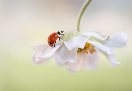 Flower Lady, Mandy Disher